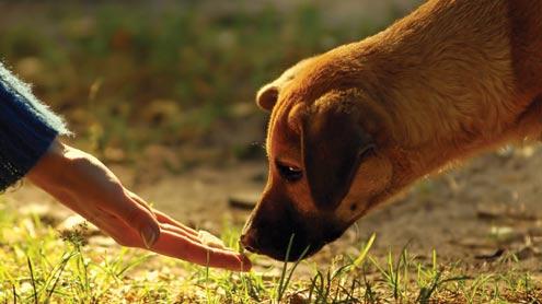 1418460 96644209 - کتے سونگھ کر انسان میں کینسر کی تشخیص کرسکتے ہیں ،امریکی تحقیق