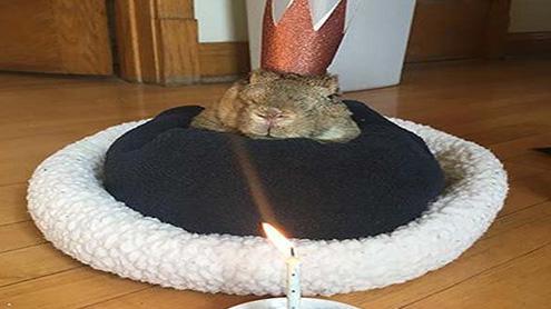 1400382 85962688 - سولہ سالہ '' مائیک'' کو دنیا کاعمررسیدہ خرگوش ہونے کا اعزازحاصل