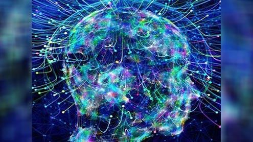 1408114 22077965 - انسانوں میں جانوروں کی طرح مقناطیسی میدان کو سمجھنے کی صلاحیت موج