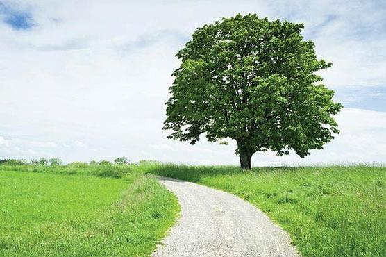 ایک درخت بھی شہر کی گرمی کم کرنے میں مدد گار