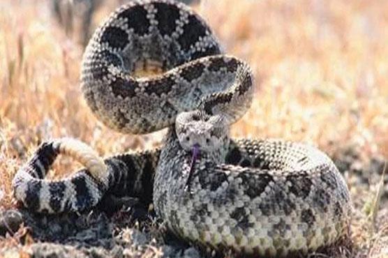سانپ،اژدہے بلوں سے نکل کر آبادی میں پہنچ گئے