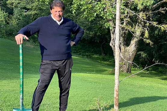 وزیر اعظم نے نتھیا گلی میں  پائین کا پودا لگایا