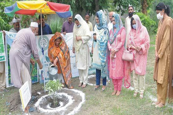 ڈاکٹر نادیہ عزیز نے کالج میں پودا  لگا کر شجرکاری مہم کا آغاز کر دیا
