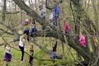 درختوں کی قربت، بچوں کی دماغی نشوونما کیلئے مفید قرار