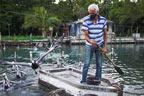 کیوبا کے باشندے نے سیکڑوں پیلیکن کو دوست بنالیا