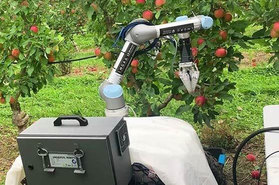 7 سیکنڈ میں درخت سے پھل اتارنے والا روبوٹ تیار