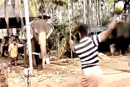 بھارت میں ہاتھی بھی کرکٹ کھیلنے لگا، ویڈیو وائرل