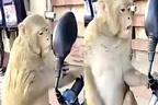 بندر نے خود کو شیشے میں دیکھ کر کیا کیا،ویڈیو وائرل