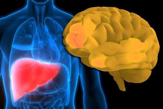 خطرناک دماغی بیماری کی ابتدا جگر سے ہوتی ہے :تحقیق