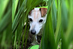گمشدہ کتا ساڑھے 3سو کلومیٹر سفر طے کرکے گھر پہنچ گیا