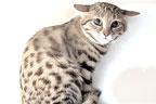 سال میں 3,000سے زائد شکار کرنیوالی خطرناک بلی