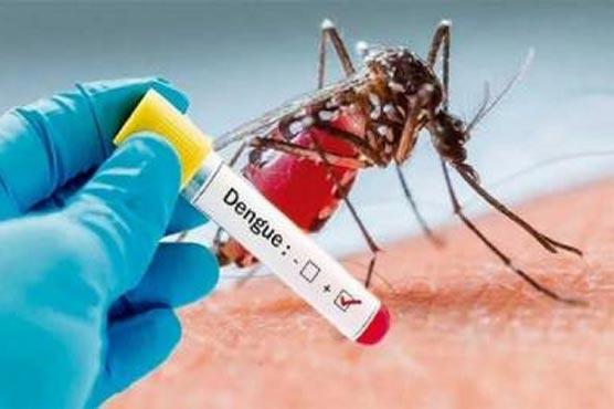 صوبہ بھر سے ڈینگی کے  17 مریض رپورٹ