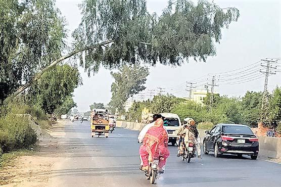 ہیڈ بمبانوالہ:سڑک پر جھکا در خت  شہریوں کی زندگی کیلئے خطرہ