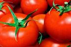 پہلا جینیاتی تبدیل شدہ ٹماٹر، قیمت 11ہزار روپے فی کلو