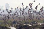 جنگلی پرندوں کی ناجائز تجارت،2افراد گرفتار